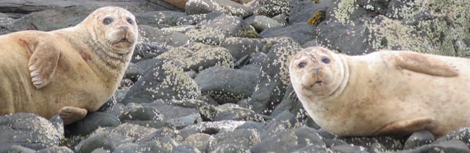 steph's-seals
