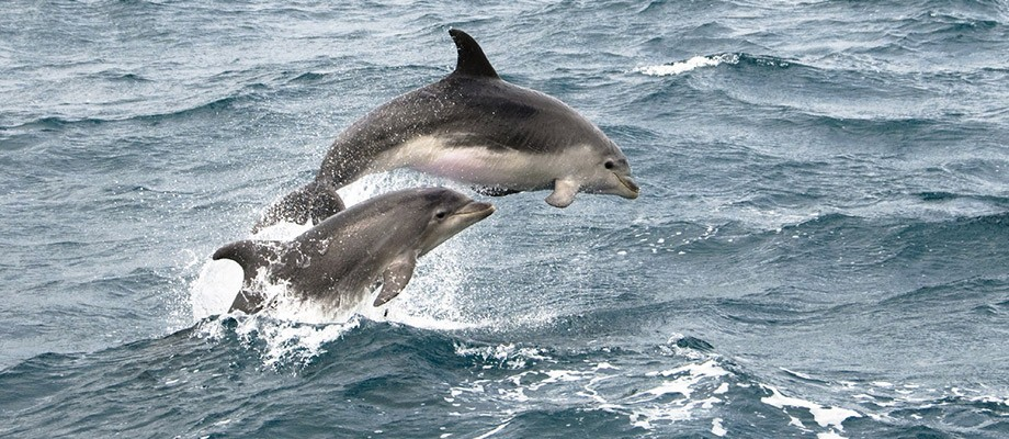 Dolphins-skye
