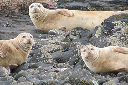 stephs-seals-isle-of-skye